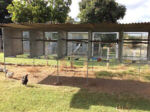5 bay suspend aviary Chillagoe Tablelands Preview