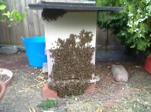 Bee hive 8 frame $ 220 Rowville Knox Area Preview