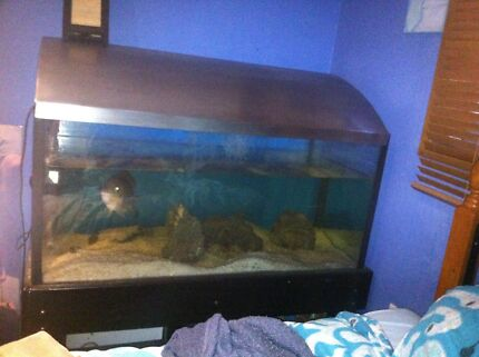Two 4ft fish tanks with everything, 2 reptile setups  Bateau Bay Wyong Area Preview