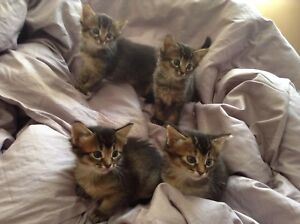 Kittens for sale in Mississauga