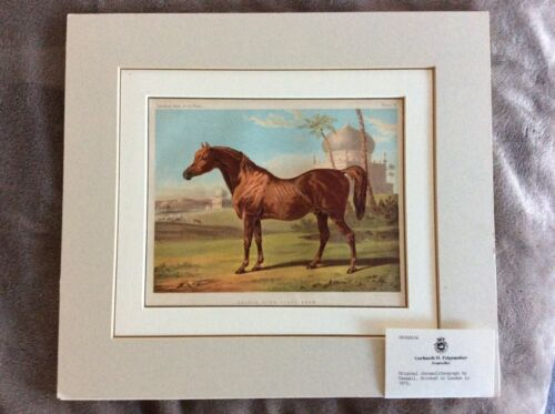 1875 GOLDIE, HIGH CLASS ARAB HORSE, LIMITED ORIG. CHROMOLITHOGRAPH