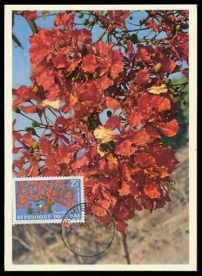 TCHAD MK 1964 FLORA BAUM FLAMBOYANT MAXIMUMKARTE CARTE MAXIMUM CARD MC CM d4946 (Flamboyant D)