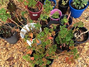Stress free Gardening Belrose Warringah Area Preview