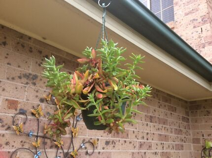 Indoor and Outdoor plants , potted and hanging