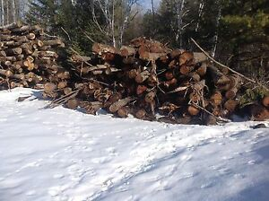 Logs that was cut last fall  will sell if the price is good
