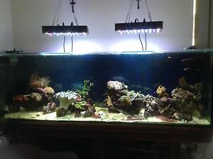 Marine Various coral, fish and equipment for sale Port Kennedy Rockingham Area Preview