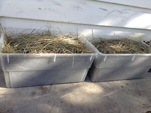 Brome grass/alfalfa hay with bins for easy storage