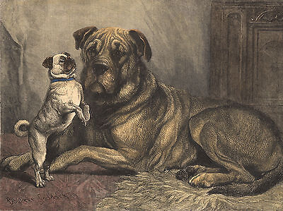 MASTIFF AND CUTE PUG CHARMING DOG GREETINGS NOTE CARD