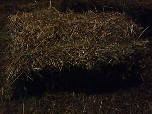 Small square Haybale's for sale