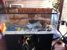 4ft reptile one tank on stand n some accessories Drayton Toowoomba City Preview