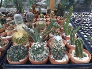 Cactus and Succulents. Rare Plants.