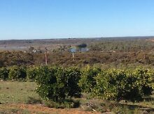 2 Cottages,Organic Orchard,bush set on 33 acres overlooking river Loxton Waikerie Preview