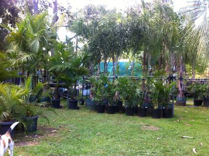 PALM TREES AND TROPICAL PLANTS, Prices start at $19.
