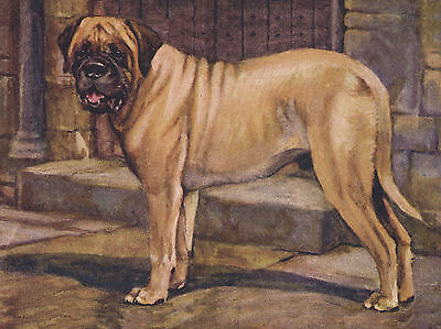 MASTIFF STANDING DOG LOVELY GREETINGS NOTE CARD