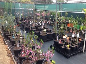 Fruit trees and Ornamental Trees