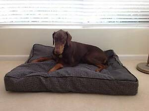 "Dog beds  ""Animates"" brand from Petbarn. Burnie Burnie Area Preview"