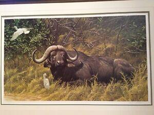 A Resting Place - Cape Buffalo par Robert Bateman