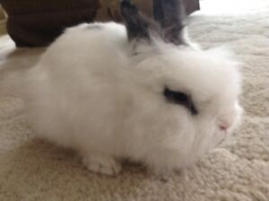 Looking for someone who wants a rabbit