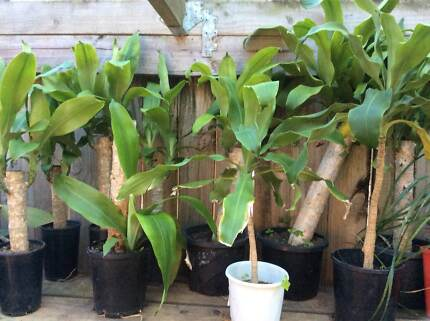 Assorted cheap potted plants