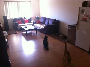 Large room to rent for single or couple Victoria Park Victoria Park Area Preview
