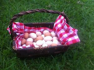 Fertile Eggs for Incubating or Hen Hatching Yatala Gold Coast North Preview