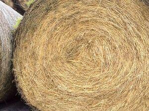Hay round bales Pakenham Cardinia Area Preview
