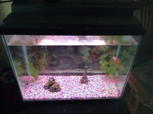 30 gelan Fish tank and gold fishes