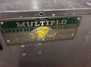 MULTIPLO electric egg incubator. Singleton Singleton Area Preview