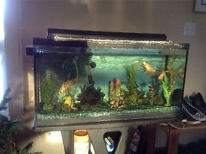 Reduced!! Fish Tank and all accesories