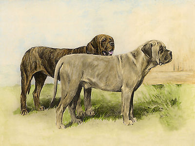 MASTIFF TWO DOGS LOVELY DOG GREETINGS NOTE CARD