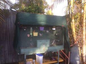 Four African love birds plus cage Collingwood Park Ipswich City Preview