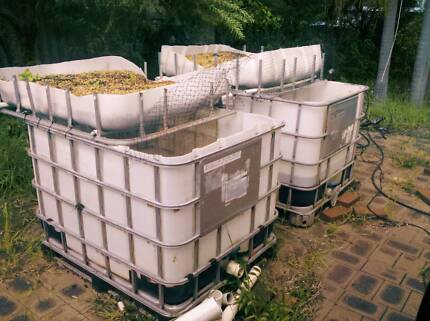 Aquaponics Set up x2 pods / IBC Morley Bayswater Area Preview