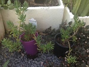 Succulents Lenah Valley Hobart City Preview