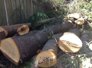 Cherry and cedar logs