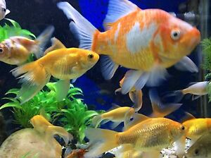 Fish Noble Park Greater Dandenong Preview