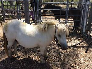 George the kids pony. Lowood Somerset Area Preview