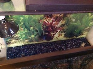 tank 65 gallons with heat lamp and accessories