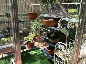Green house 6'x6' Clear  Glazing Terrigal Gosford Area Preview