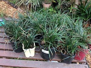 Don't stress about plants loss due to the heat - cheap plants! Belrose Warringah Area Preview
