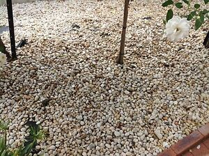 Free garden pebbles Glenmore Park Penrith Area Preview