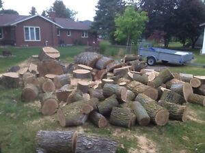 Raw Elm wood for sale