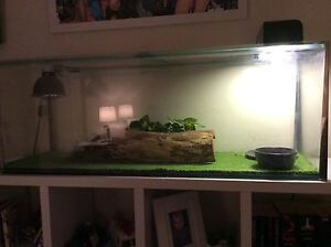 LIZARD CAGE WITH EVERYTHING INCLUDING BLUE TOUNGE LIZARD Tallebudgera Gold Coast South Preview