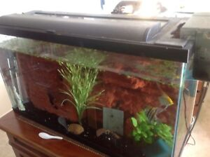 40 gallon tank with hood , filth and heater