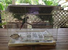 Conure pair plus cage Helensvale Gold Coast North Preview