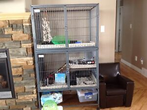 Degus and Cage.