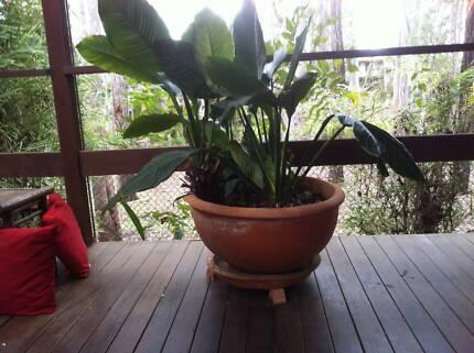 Pots Large + Bromeliads (Large)