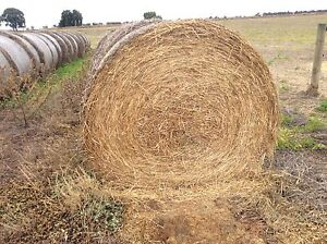 Rye grass round bales Barooga Berrigan Area Preview