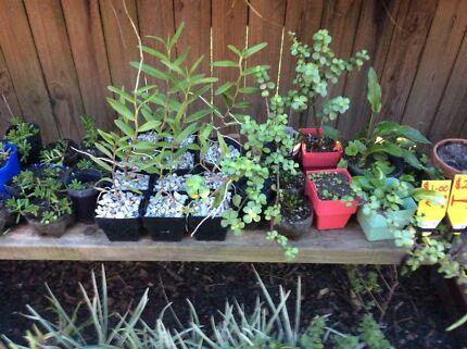 Assorted succulents cheap