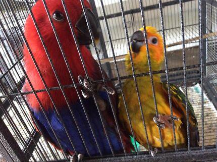 Beautiful baby hand raised birds for sale