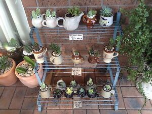 PLANTS IN POTTERY. Metford Maitland Area Preview